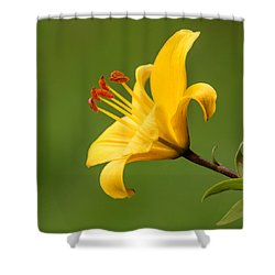 Dear Lily Shower Curtain by Roy McPeak