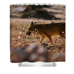Death Valley Coyote And Flowers Shower Curtain by Daniel Woodrum
