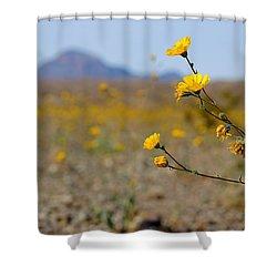 Death Valley Superbloom 501 Shower Curtain
