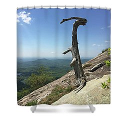 Decaying Tree At The Top Of Table Rock Trail South Carolina Shower Curtain by Kelly Hazel