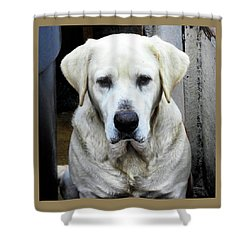 Deck Hand Dog Shower Curtain by Laura Ragland