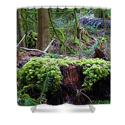 Decomposers Shower Curtain