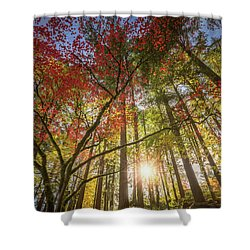 Decorated By Japanese Maple Shower Curtain