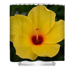 Decorative Floral Photo A9416 Shower Curtain