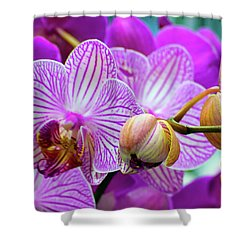 Shower Curtain featuring the photograph Decorative Fuschia Orchid Still Life by Mas Art Studio
