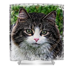 Shower Curtain featuring the mixed media Decorative Maine Coon Cat A4122016 by Mas Art Studio