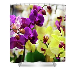 Shower Curtain featuring the photograph Decorative Orchids Still Life B82418 by Mas Art Studio