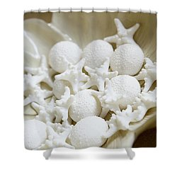 Decorative Seashells Shower Curtain by Kyle Rothenborg - Printscapes