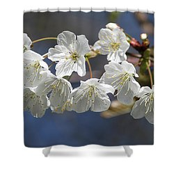 Deep Blue  Cherry Blossom Shower Curtain