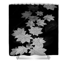 Deep Forest Maple Shower Curtain
