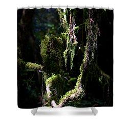 Shower Curtain featuring the photograph Deep In The Forest by Lori Seaman