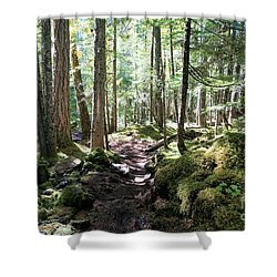 Deep In The Oregon Forest Shower Curtain