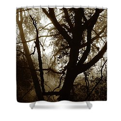 Shower Curtain featuring the photograph Deep In The Sequoia National Forest by Ayasha Loya