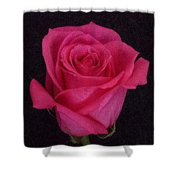 Deep Pink Rose On Black Shower Curtain
