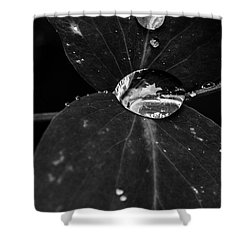 Shower Curtain featuring the photograph Deep Refraction Between Leaves by Darcy Michaelchuk