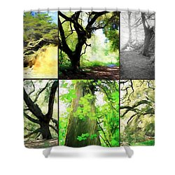 Deeply Rooted Shower Curtain by Kathy Bassett