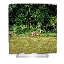 Deer 2 Shower Curtain