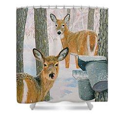 Deer And Sap Buckets Shower Curtain