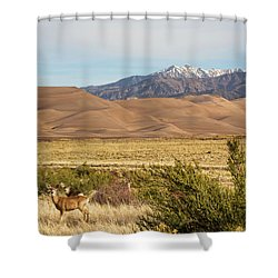 Shower Curtain featuring the photograph Deer And The Colorado Sand Dunes by James BO Insogna