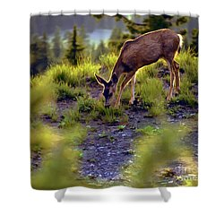 Deer At Crater Lake, Oregon Shower Curtain