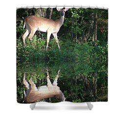 Deer At Dusk Shower Curtain by Rick Friedle