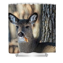 Shower Curtain featuring the photograph Deer At The Salad Bar by Paul Freidlund