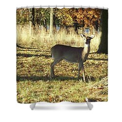 Deer At Valley Forge Shower Curtain