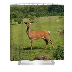Deer Calf. Shower Curtain