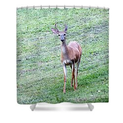 Deer In A Field Shower Curtain