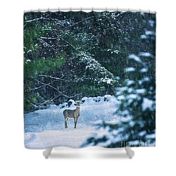 Deer In A Snowy Glade Shower Curtain by Diane Diederich