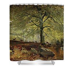 Deer In A Wood Shower Curtain by Joseph Adam