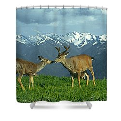 Ma-181-deer In Love  Shower Curtain