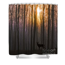 Deer In The Forest At Sunrise Shower Curtain by Diane Diederich