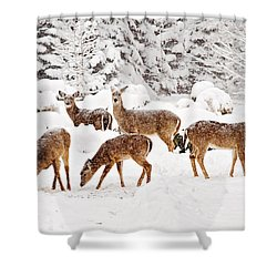 Shower Curtain featuring the photograph Deer In The Snow 2 by Angel Cher