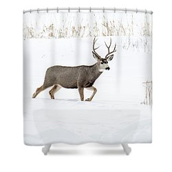 Shower Curtain featuring the photograph Deer In The Snow by Rebecca Margraf