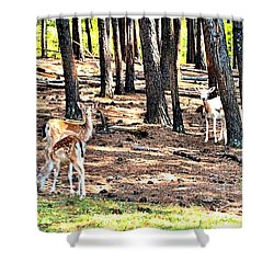Deer In The Summer Forest Shower Curtain