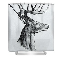 Shower Curtain featuring the drawing Deer by Michael  TMAD Finney