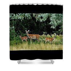 Shower Curtain featuring the photograph Deer Mom by Larry Campbell
