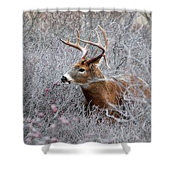 Deer On A Frosty Morning  Shower Curtain by Nancy Landry