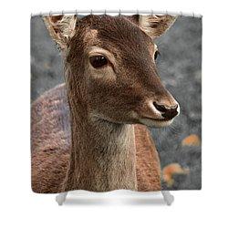 Deer Portrait Shower Curtain