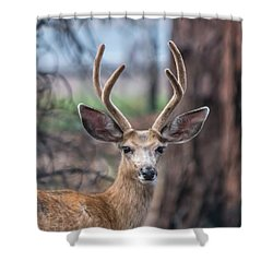 Deer Stare Shower Curtain