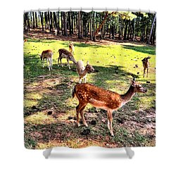 Deerfield Shower Curtain
