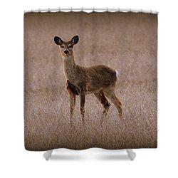 Deerfield Shower Curtain