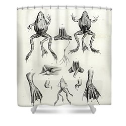 Deformed Frogs - Historic Shower Curtain