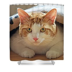 Shower Curtain featuring the photograph Delectable Companion.. by Nina Stavlund