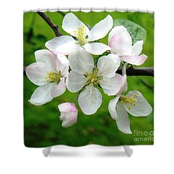 Delicate Apple Blossoms Shower Curtain