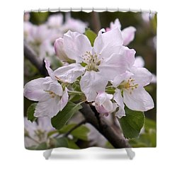Delicate Apple Blossoms Shower Curtain by Rona Black