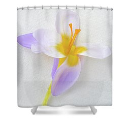Shower Curtain featuring the photograph Delicate Art Of Crocus by Terence Davis