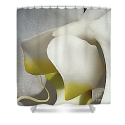 Delicate As Egg Yolk Shower Curtain by Sherry Hallemeier