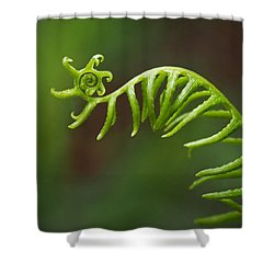 Delicate Fern Frond Spiral Shower Curtain by Rona Black
